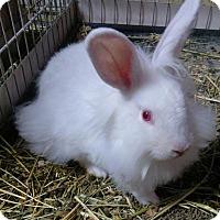 Adopt A Pet :: Rodger - Palm Coast, FL