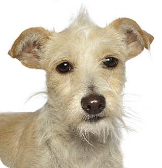 Terrier (Unknown Type, Medium) Mix Dog for adoption in Oakland Park, Florida - Tina
