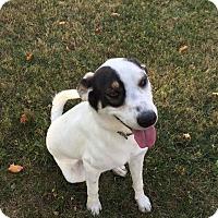 Adopt A Pet :: Sweet Chloe - Hanover, PA