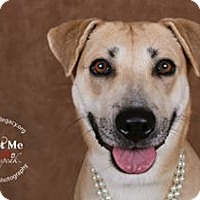 Adopt A Pet :: Abby - Cincinnati, OH