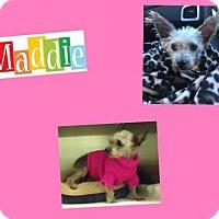 Adopt A Pet :: MADDIE - Plano, TX