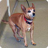 Adopt A Pet :: Conner - Wildomar, CA
