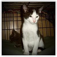 Adopt A Pet :: AXEL - Medford, WI