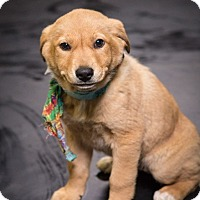 Adopt A Pet :: Jan Brady - Brattleboro, VT