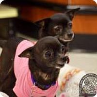 Adopt A Pet :: Laverne & Shirley - Salt Lake City, UT