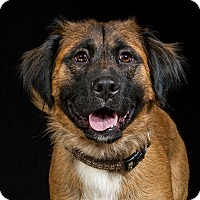 Adopt A Pet :: Mazie - Livonia, MI