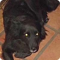 Adopt A Pet :: Liz Taylor - Key Biscayne, FL