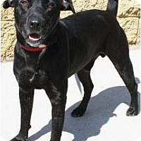 Adopt A Pet :: Toby JR - Gilbert, AZ