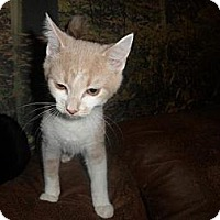 Adopt A Pet :: Romeow - Oxford, NY