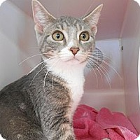 Adopt A Pet :: Vixie - Maywood, NJ