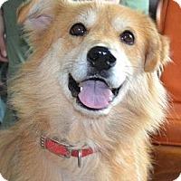 Adopt A Pet :: Belle - Foster, RI