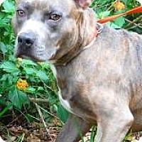 Adopt A Pet :: Buck - Gainesville, FL