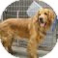 Adopt A Pet :: Harvey - Denver, CO