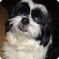 Adopt A Pet :: Dani - Madison, WI