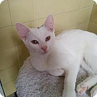Adopt A Pet :: Charlie - Brooklyn, NY