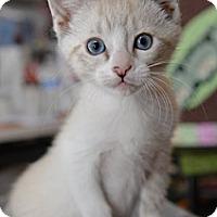 Adopt A Pet :: Jaidee - Davis, CA
