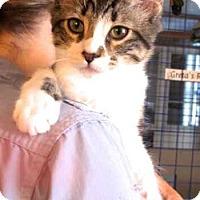 Adopt A Pet :: Tommy and Trevor - Davis, CA
