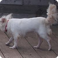 Adopt A Pet :: Britt - Prole, IA