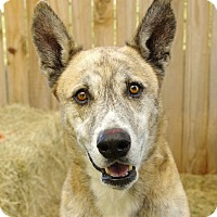 Adopt A Pet :: Tyson - Inverness, FL