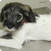 Adopt A Pet :: Bunny - Norwalk, CT
