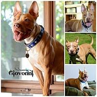 Adopt A Pet :: Giovonni - Sioux Falls, SD