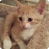 Adopt A Pet :: Bev's Sunshine - Yukon, OK