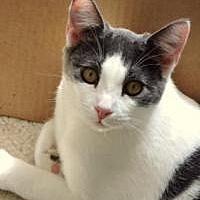 Adopt A Pet :: Pretzel - McKinney, TX