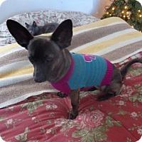 Adopt A Pet :: Princess - Only $65 adoption! - Litchfield Park, AZ