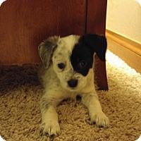 Adopt A Pet :: Snuggles - PENDING - Grafton, WI