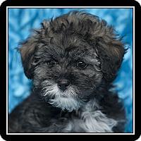 Adopt A Pet :: Bodie - San Dimas, CA