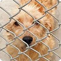 Adopt A Pet :: Brandon-ADOPTION PENDING - Boulder, CO