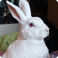 Adopt A Pet :: Kaylana - Portland, ME