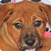 Adopt A Pet :: **NICHOLA** MEET JUNE 11TH! - Mukwonago, WI