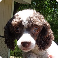 Adopt A Pet :: Marsha - Crump, TN