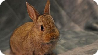 Dwarf Mix for adoption in Montclair, California - Tina