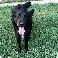 Adopt A Pet :: Kayli - Glastonbury, CT