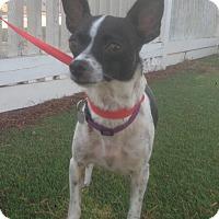 Adopt A Pet :: Cora (BH) - Santa Ana, CA