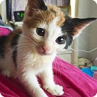 Adopt A Pet :: Zoomer - Austin, TX
