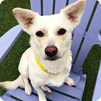 Adopt A Pet :: Selena - Littleton, CO
