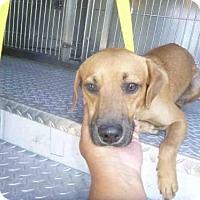Adopt A Pet :: PHOENIX - Naples, FL