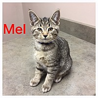 Adopt A Pet :: Mel - Woodstock, ON