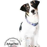 Adopt A Pet :: PEANUT - Sherman Oaks, CA