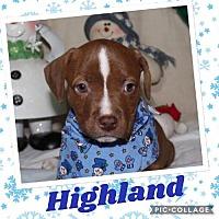 Adopt A Pet :: Highland - Valparaiso, IN