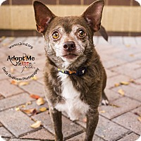 Adopt A Pet :: Malcolm - Mooresville, NC