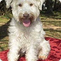 Adopt A Pet :: Buddy Davis--- Fun boy---N - Alvin, TX