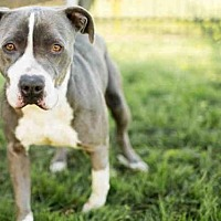 Adopt A Pet :: JOHNSON - Los Angeles, CA