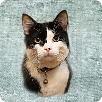 Adopt A Pet :: Sammy - Newtown, CT