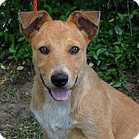 Adopt A Pet :: *Lola- PENDING - Westport, CT
