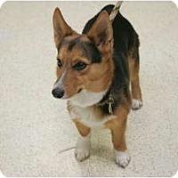 Adopt A Pet :: Wee Man - Inola, OK