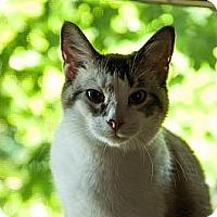 Adopt A Pet :: Puck - Byron Center, MI